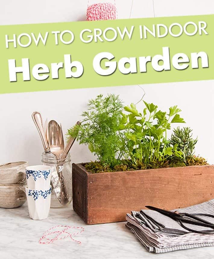 How To Grow Indoor Herb Garden – Kitchen Garden Planter