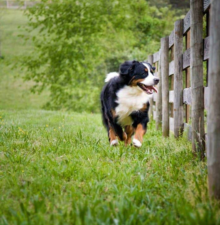 Keep Your Dog From Escaping the Yard