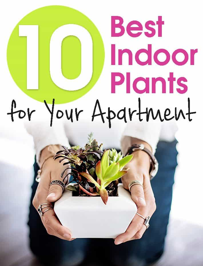 10 Best Indoor Plants for Your Apartment